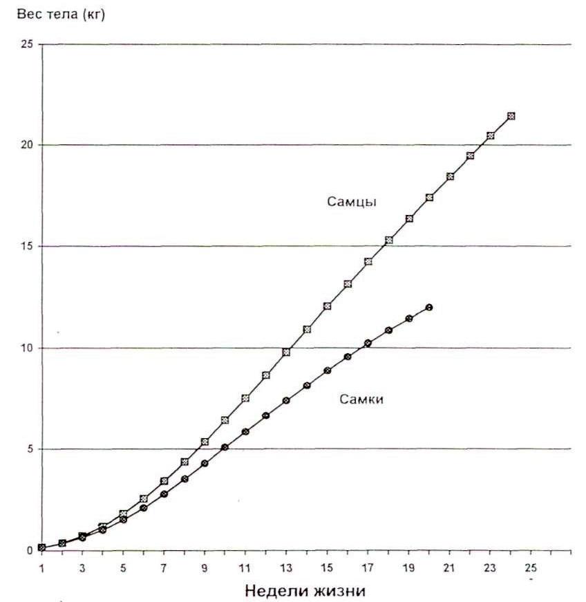 Динамика роста массы туши